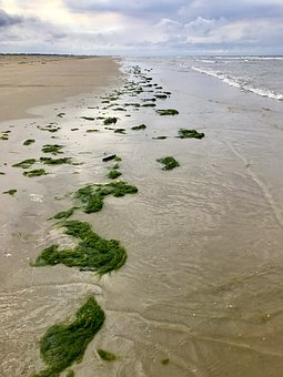 Coast, Large Algae, Sea Algae