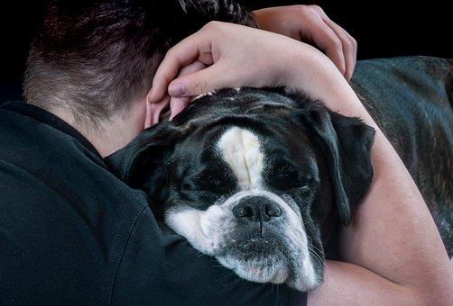 Dog, Dog Face, Hug, Person, Poor, Pet, Animal