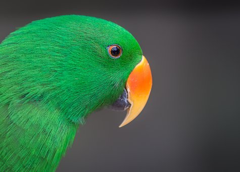 Green, Bird, Parrot, Feather, Animal, Nature, Colorful