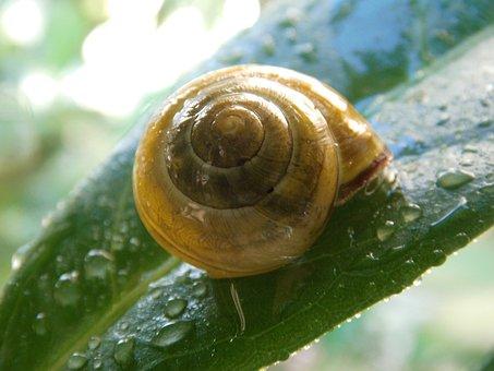 Frühlingsanfang, Spring, Fresh, Moist, Dewdrop, Snail