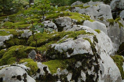 Stones, Moss, Fouling, Wilderness, Landscape, Green