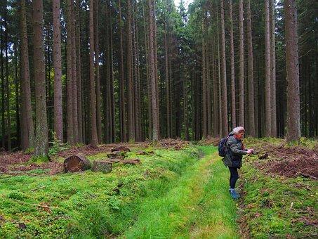 Nature, Impressive, Landscape, Forest