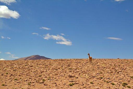 Chile, Animals, Nature, Animal World