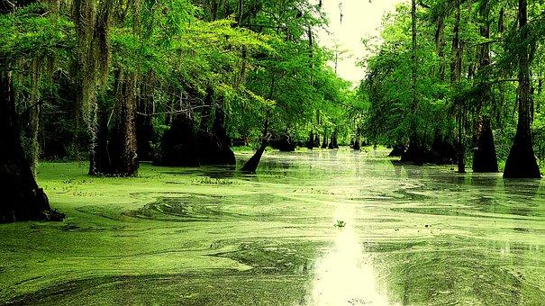 Nature, Bayou, Louisiana, America, Marsh