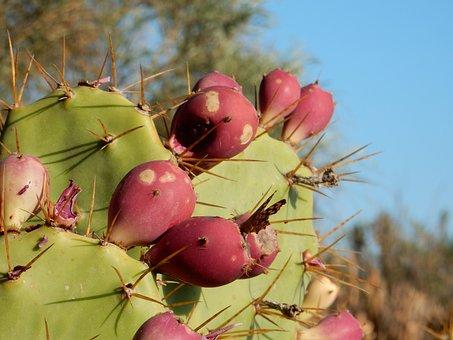 Cactus, Fruit, Butterfly, Mediterranean