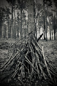 Forest, Stick Pile, Wood, Twigs, Felling