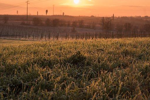 Tuscany, Grass, Sun, Dawn, Sunkissed