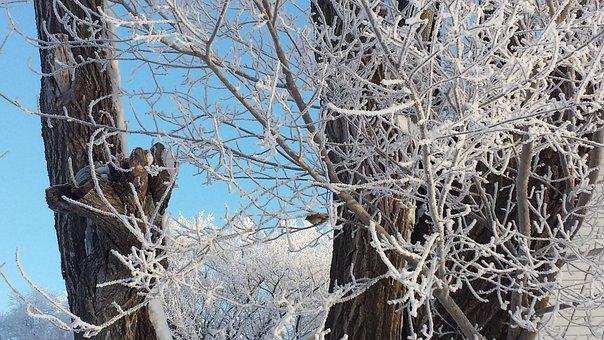 Tree, Frost, Bird, Landscape, Snowy