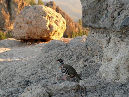 Bird, Rocks, Nature, Gran Kanaria, Es Pt It Gr
