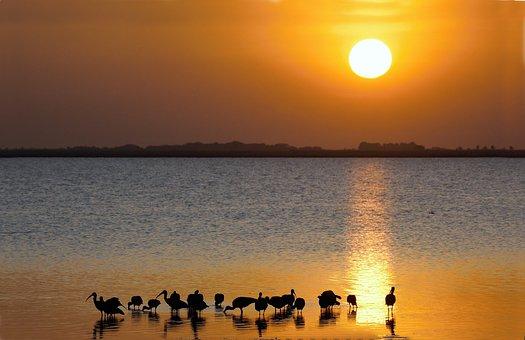 Pond, Sun, Birds, Ibis, Nature, Sky