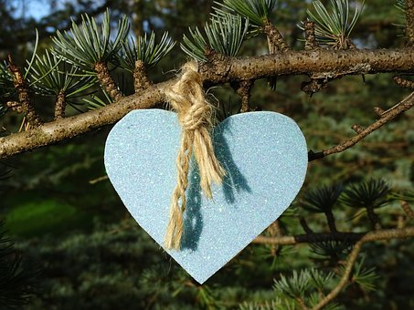 Heart, Branch, Pine, Love, Friendship