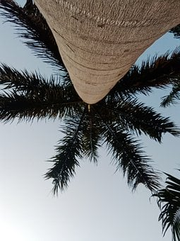Palm, Coconut, Tropical, Monstera, Tree, Exotic, Summer