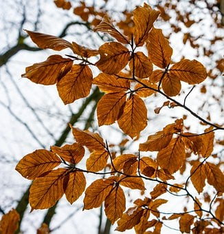 Tree, Leaf, Forest, Leaves, Autumn