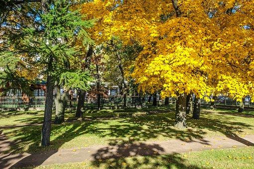 Autumn, Beauty, St Petersburg, Russia, Park, Maple