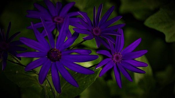 Flowers, Purple, Background, Beauty, Love, Plant