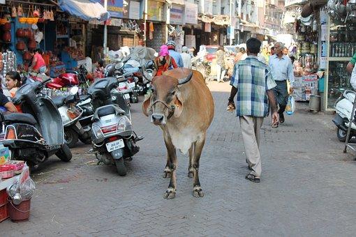 Mumbai, India, Mumbai Streets, Cow, Holy Animal