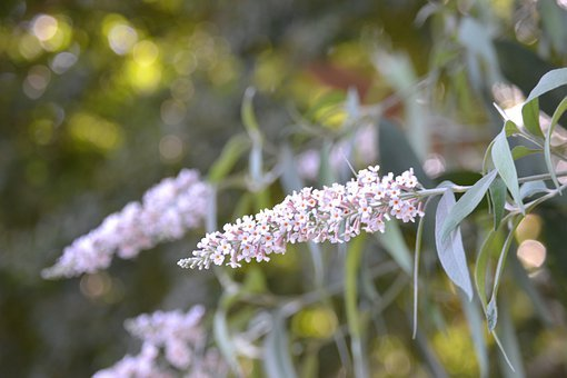 Flowers, Plant, Garden, Japan, Blue, Home, Three