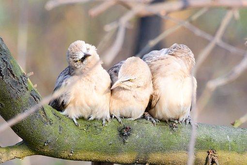 Bird Photography, Nature, Animal, Parrot, Wildlife