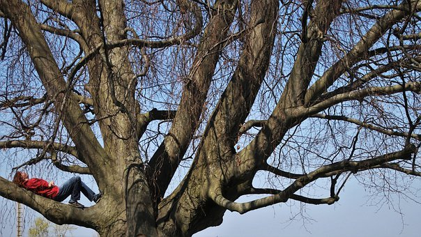 Relaxation, The Branches Of The Tree