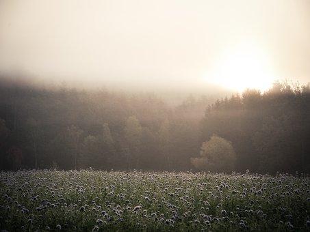 Summer, Hot, Fog, Haze, Forest, Sun