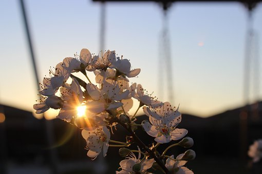 Aesthetic, Nature, Golden, Flowers, Beautiful