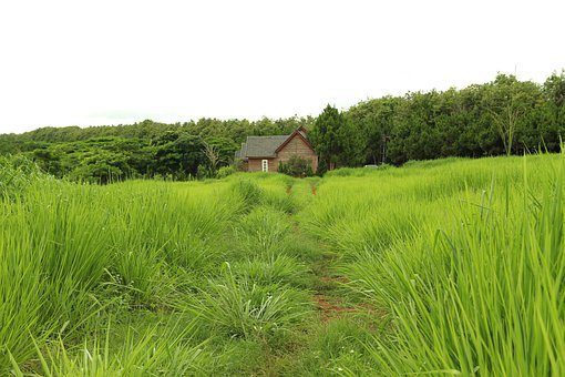 Littlehouse, Grass, House, Home