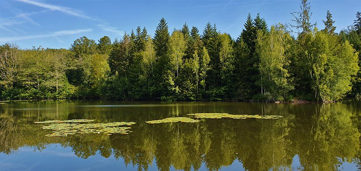 Pond, Lake, Forest, Nature, Water Lilies