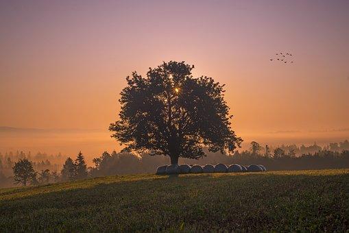 Tree, Landscape, Nature, Wood, Sunrise, Forest