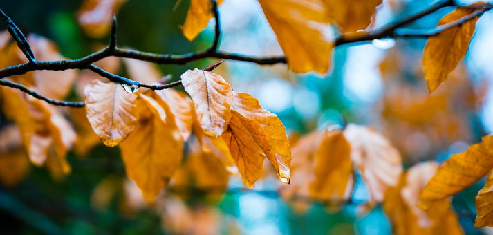 Leaf, Branch, Forest, Tree, Autumn, Leaves, Sun