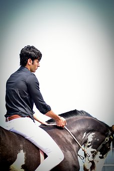 Male Model, Male Model On Horse, Horse, Horseman
