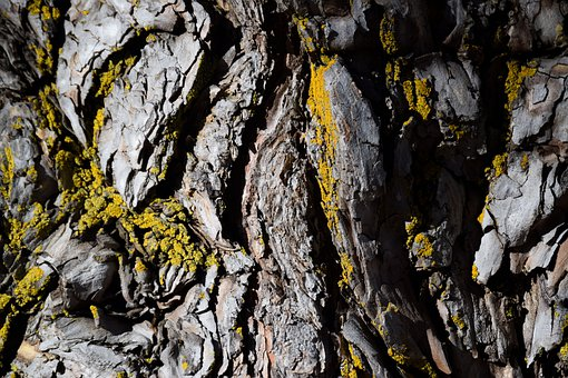 Nature, Macro, Tree, Bark, Moss