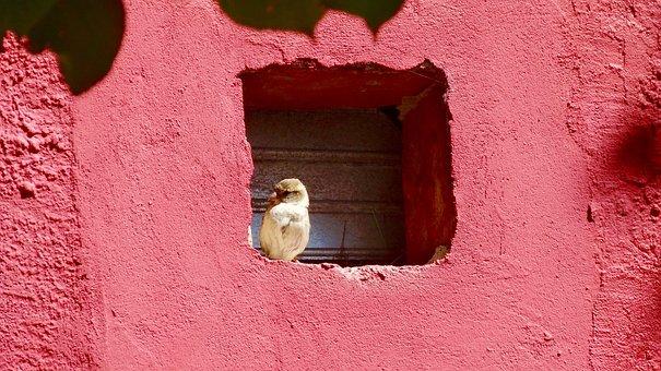 Sparrow, Bird, Nature, Sperling, Animal