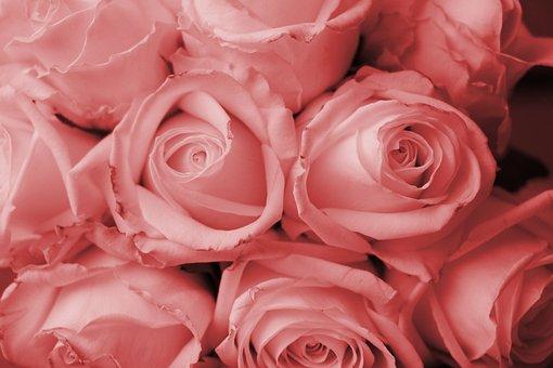 Roses, Bouquet, Tulips, Orange, Red