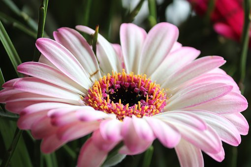 Bouquet Of Flowers, Gerbera, White, Pink, Bright