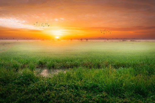 Sunrise, Landscape, Rice, Rice Paddy, Paddy Field