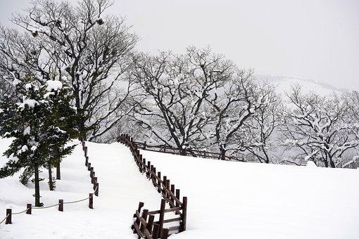 Snow, Winter, Brook, Mountain, Tree, Nature, Beautiful