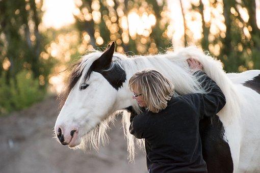 Tinker, Horse, Portrait, Animal, Embrace, Woman, Girl