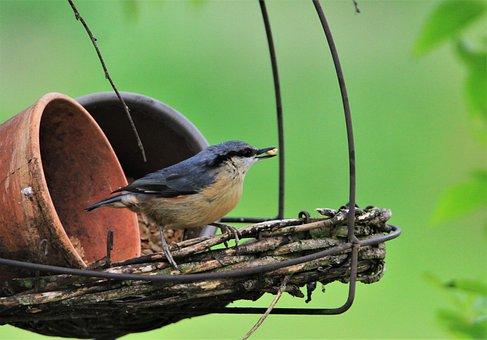 Kleiber, Bird, Songbird, Nature, Bill, Animal World