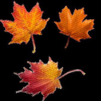 Autumn, Leaves, Glitter, Botanical, Nature, Fall