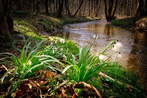 Forest, Creek, Bach, River, Nature, Landscape, Trees