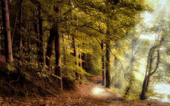 Forest, Forest Path, Deciduous Trees, Trees, Mood