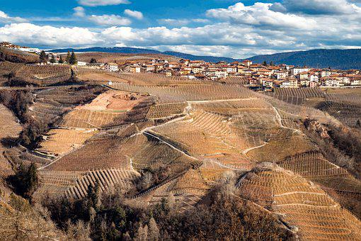 Trento, Italy, Vineyard, Grape, Dolomites, Landscape