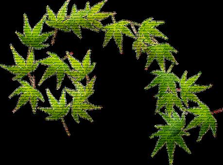 Leaves, French Handwriting, Vine, Ivy, Green, Leaf