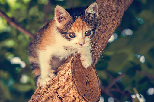 Cat, Miao, Merged, Feline, Animal, Cute, Kitten, Kitty