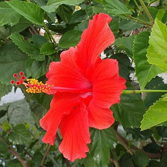 Red Flower, Nature, Blossom, Spring