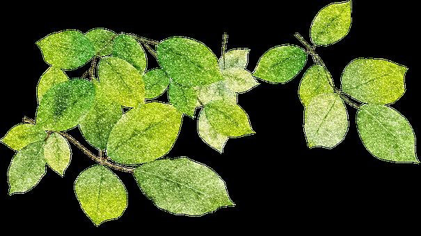 Leaves, Glitter, Botanical, Nature, Summer, Flora