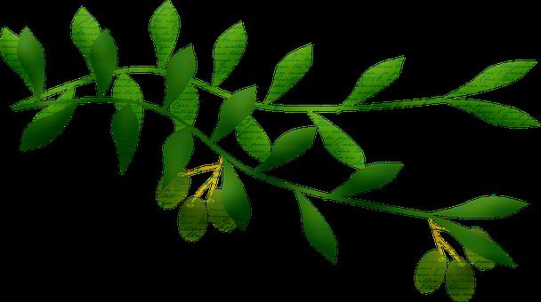 Olive Branch, Leaf, Laurel, Olives, Leaves, Wreath