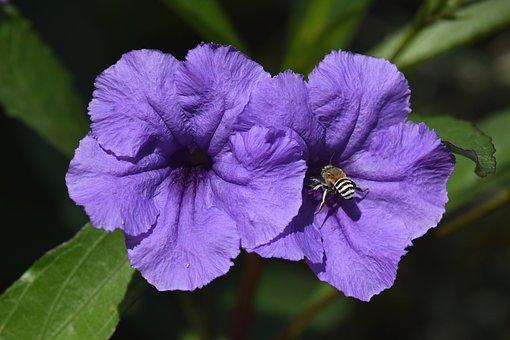 Flowers, Park, Garden, Spring, Bloom, Pair, Summer