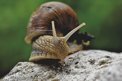 Snail, Shell, Mollusk, Probe, Mucus, Crawl, Slowly