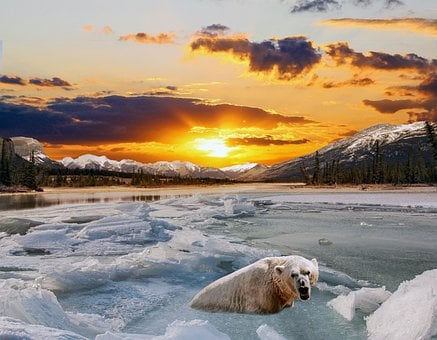 Sunset, Landscape, Snow, Ice, Polar Bear, Winter, River